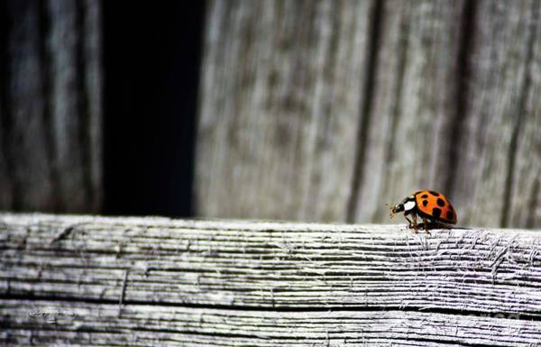 Photograph - Lonely Ladybug by Ms Judi