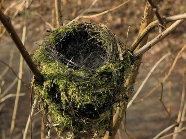 Empty Nest Wall Art - Photograph - Lonely Nest by Rachel Erhardt