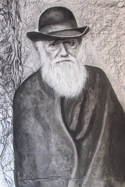 Drawing - Lonely Occupation - C. Darwin by Eric Dee