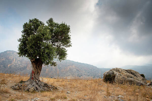 Outdoor Wall Art - Photograph - Lonely Olive Tree And Stormy Cloudy Sky by Michalakis Ppalis