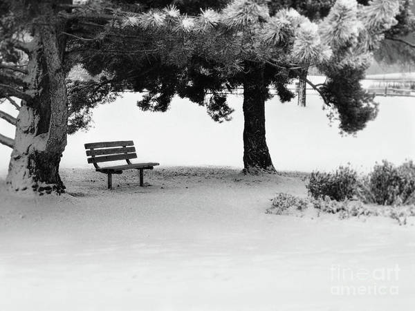 Digital Art - Lonely Park Bench by Elle Arden Walby