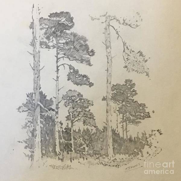 Drawing - Lonely Pines by Thomas Janos