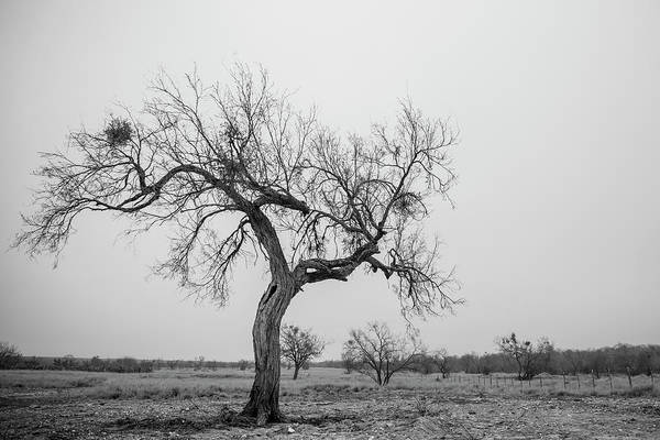 Photograph - Lonely by Ryan Heffron