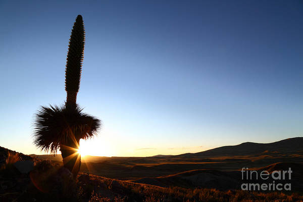 Bromelia Photograph - Lonely Sunset Sentinal by James Brunker