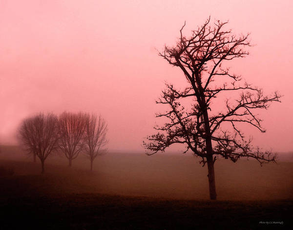 Photograph - Lonely Tree by Coleman Mattingly