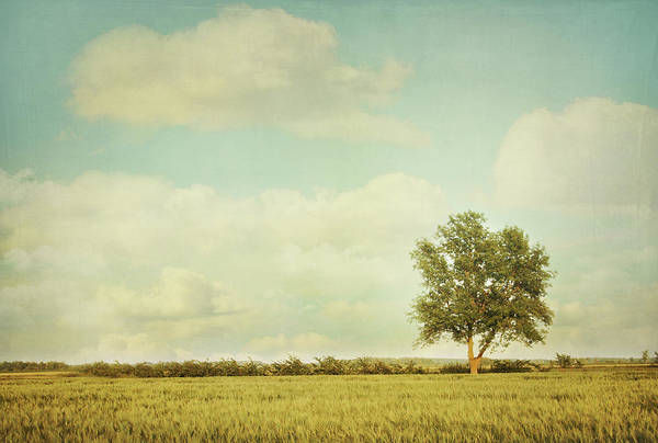 Wall Art - Photograph - Lonely Tree In Meadow With Vintage Look by Sandra Cunningham