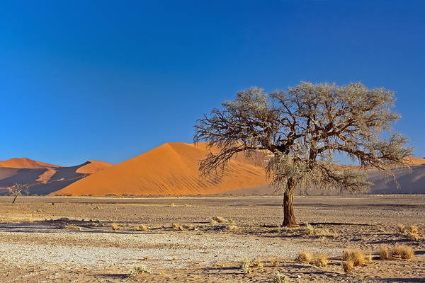 Photograph - Lonely Tree In Sossusvlei by Aivar Mikko