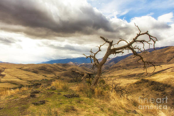 Photograph - Lonely Tree In Whitebird Canyon Idaho Landscapes By Kaylyn Franks by Omaste Witkowski