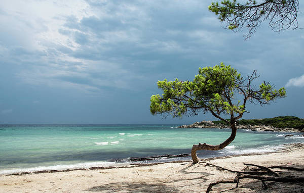 Outdoor Wall Art - Photograph - Lonely Tree On The Beach by Michalakis Ppalis