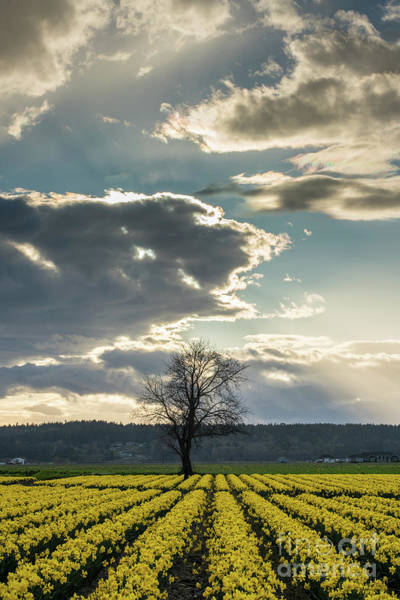 Wall Art - Photograph - Lonely Tree Soaring Skies by Mike Reid