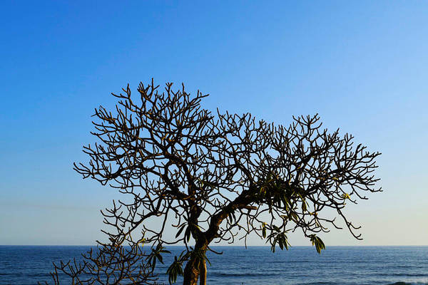 La Libertad Photograph - Lonely Tree by Totto Ponce