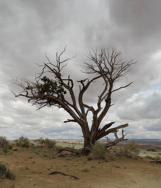 Photograph - Lonely Tree Utah by Andrew Chambers