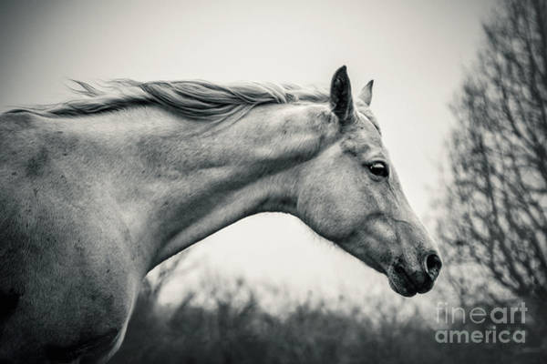 Photograph - Lonely White Horse Against The Wind by Dimitar Hristov