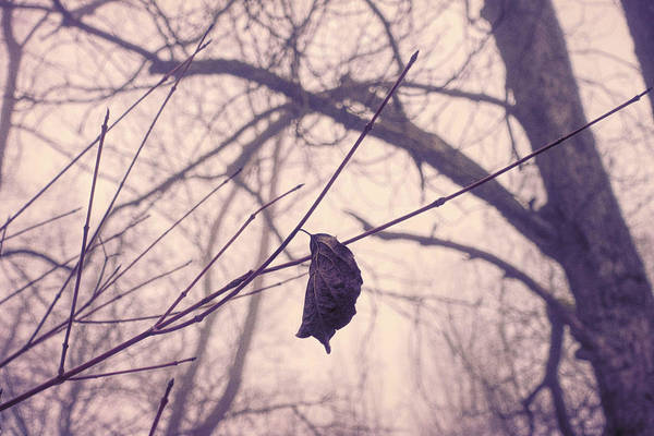 Wall Art - Photograph - Lonely Winter Leaf by Antique Images