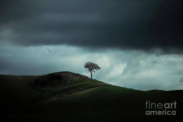 South Island Photograph - Lonescape by Evelina Kremsdorf