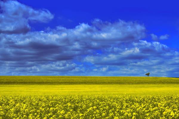 Burgundy Photograph - Lonesome by Midori Chan