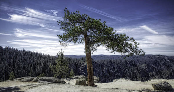 Photograph - Lonesome Tree by Chris Cousins