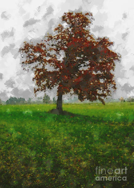 Photograph - Lonesome Tree by Jutta Maria Pusl