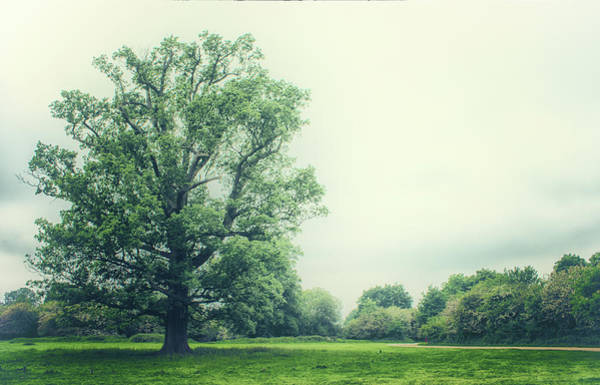 Fruit Tree Photograph - Lonesome Tree by Martin Newman