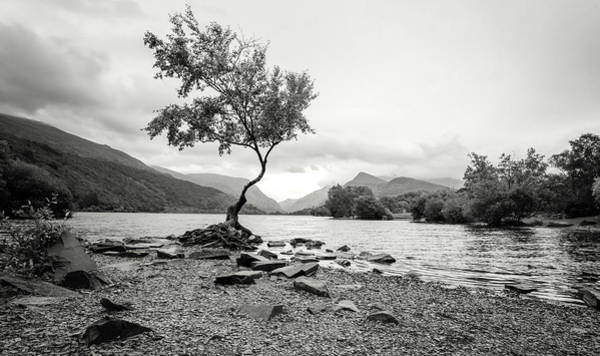 Photograph - Loney Tree Snowdonia Wales Journey Of Mountains by John Williams