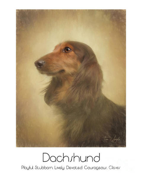 Digital Art - Long Haired Dachshund Poster by Tim Wemple