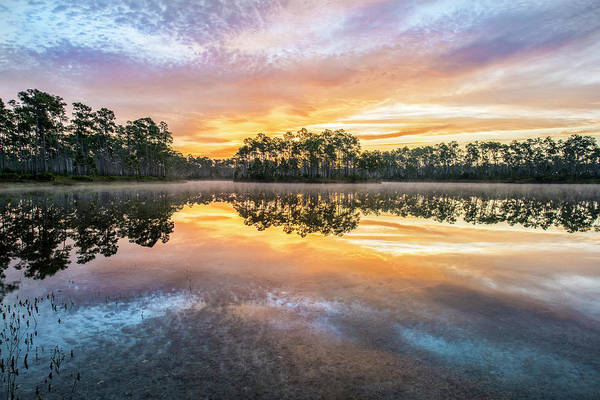 Everglades Photograph - Long Pine Colors by Jon Glaser