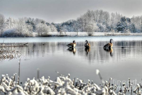Photograph - Geese At Long Run Pond by Katie Joya