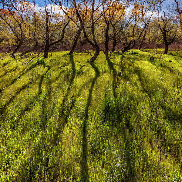 Photograph - Long Shadows by Debra and Dave Vanderlaan