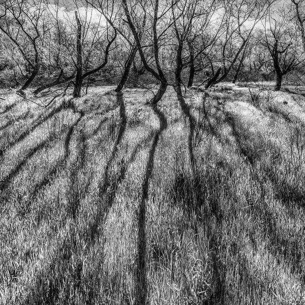 Wall Art - Photograph - Long Shadows In Black And White by Debra and Dave Vanderlaan