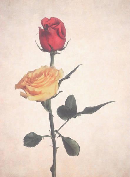 Photograph - Long Stem Roses by Garvin Hunter