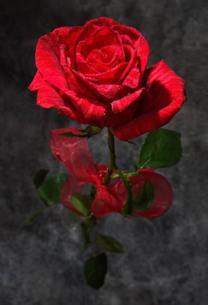 Photograph - Long Stemmed Rose by David Andersen