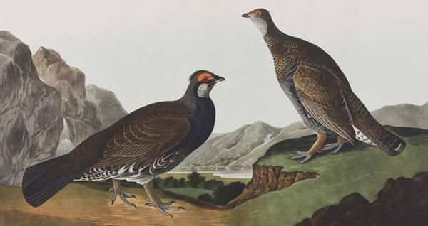 Wall Art - Painting - Long-tailed Or Dusky Grous by John James Audubon