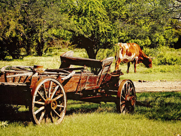 Photograph - Longhorn And Wagon by Charles McKelroy