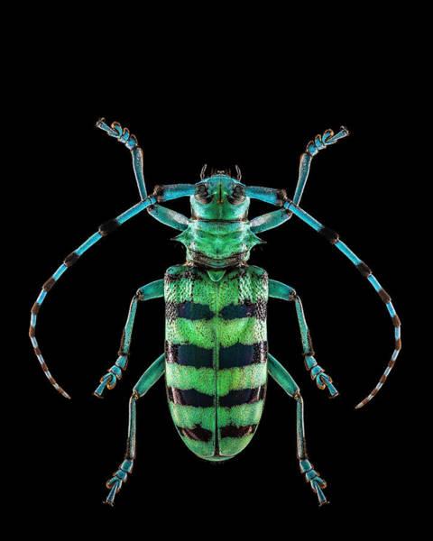 Photograph - Longhorn Beetle by Gary Shepard