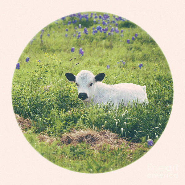 Wall Art - Photograph - Longhorn Calf In Texas Bluebonnets by Katya Horner