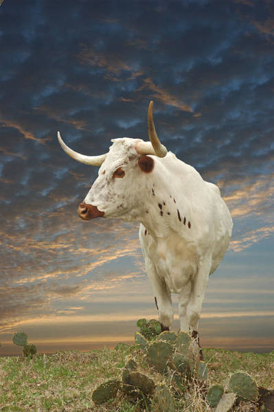 Wall Art - Photograph - Longhorn Legend  by Robert Anschutz
