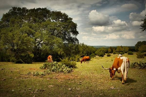 Longhorn Digital Art - Longhorns Of Texas by Linda Unger