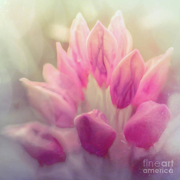 Oneness Photograph - Longing For God by Jean OKeeffe Macro Abundance Art