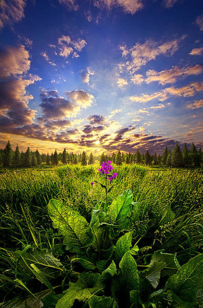 Photograph - Longing by Phil Koch
