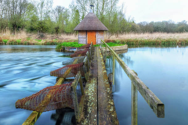 Eel Photograph - Longstock - England by Joana Kruse