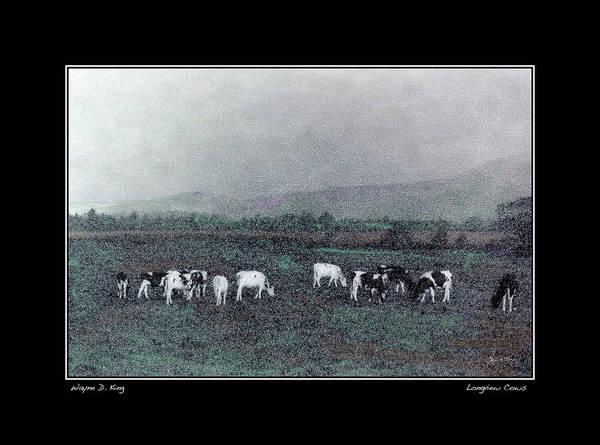 Photograph - Longview Cows Fine Art Poster And Greeting Card by Wayne King