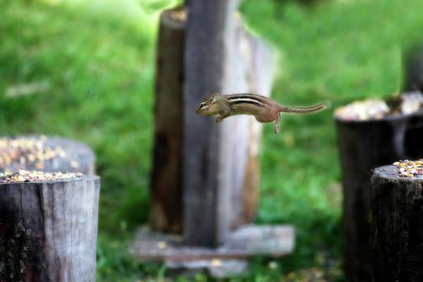 Photograph - look how high I can jump by Dan Friend