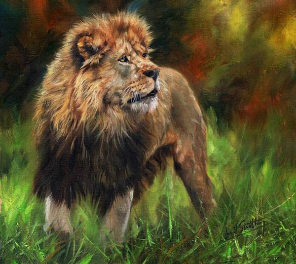 Male Lion Painting - Look Of The Lion by David Stribbling
