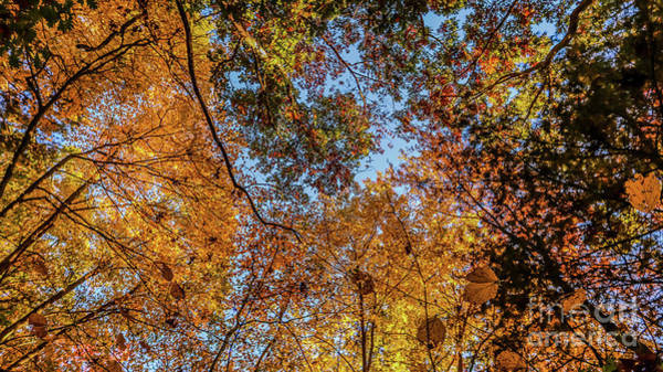 Wall Art - Photograph - Look Up by Claudia M Photography