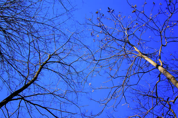 Photograph - Look Up To The Blue Sky by Reynaldo Williams