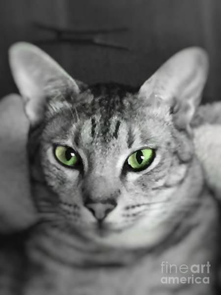 Photograph - Lookin' Atcha by Jenny Revitz Soper