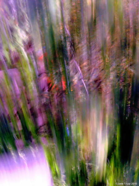 Real Ghosts Wall Art - Photograph - Looking Around  by Jane Tripp