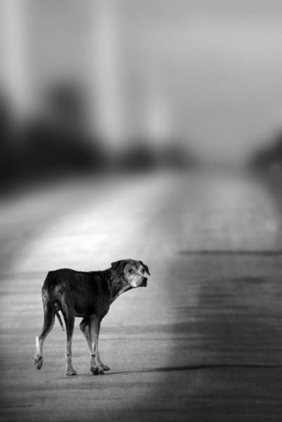 Back Road Photograph - Looking Back by Amanda Elwell