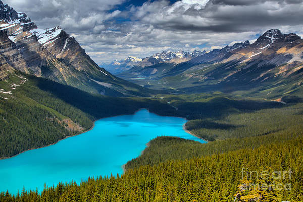 Photograph - Looking Down On Peyto Lake by Adam Jewell