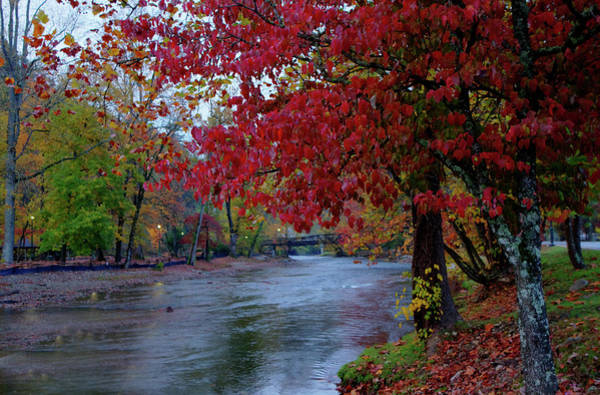Photograph - Looking Downstream by Ree Reid